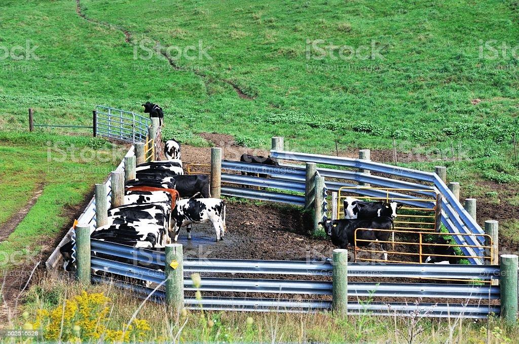 Cow Pen stock photo