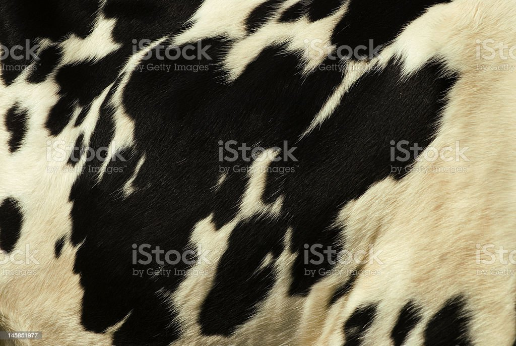 Cow skin royalty-free stock photo
