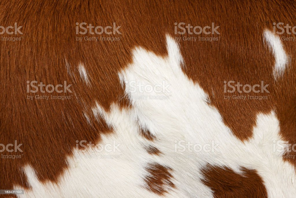 Cow skin # 3 stock photo