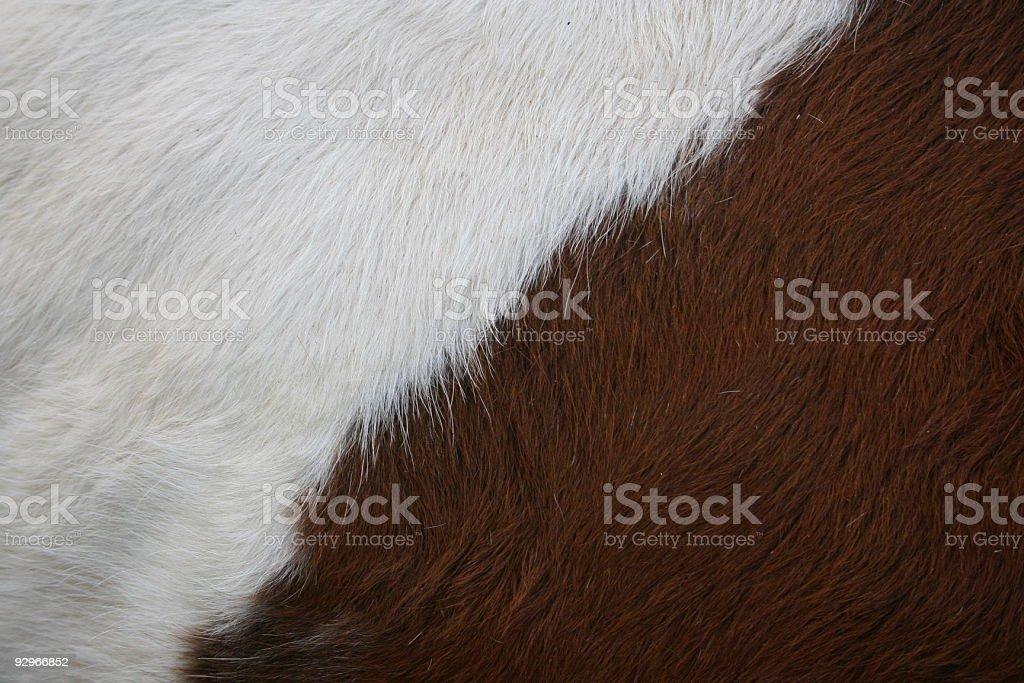 Cow Skin stock photo