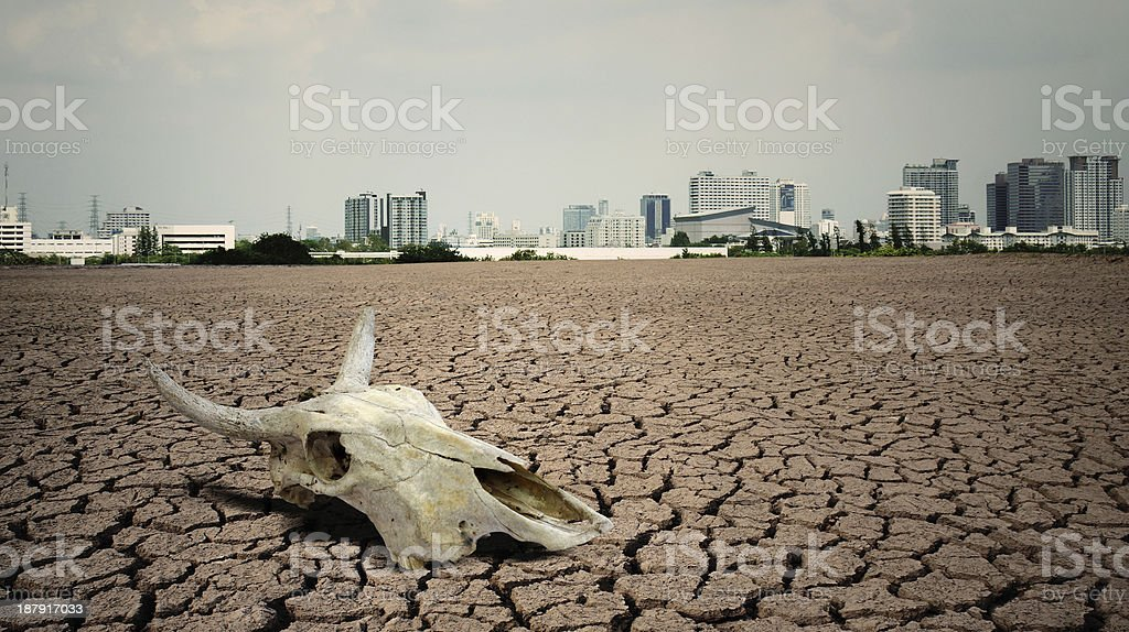 Cow skull in foreground of city in cracked dirt landscape stock photo