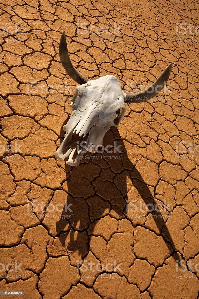 Cow Skull in the Desert royalty-free stock photo