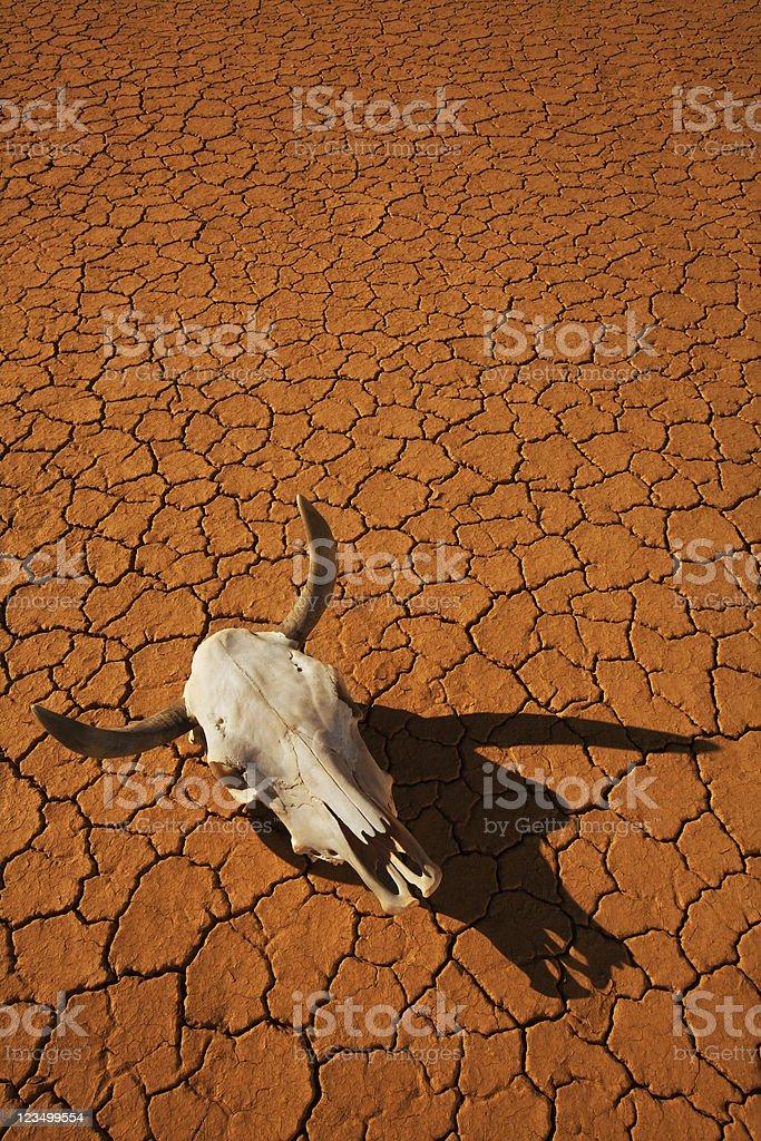 Cow Skull in the Desert stock photo