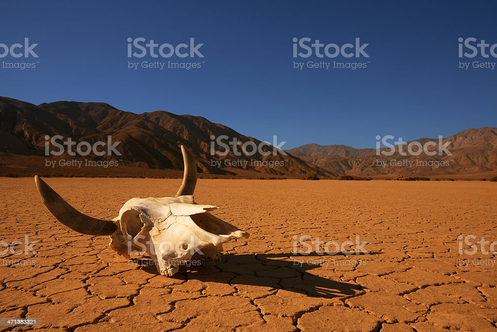 Cow Skull in the Desert stock photo