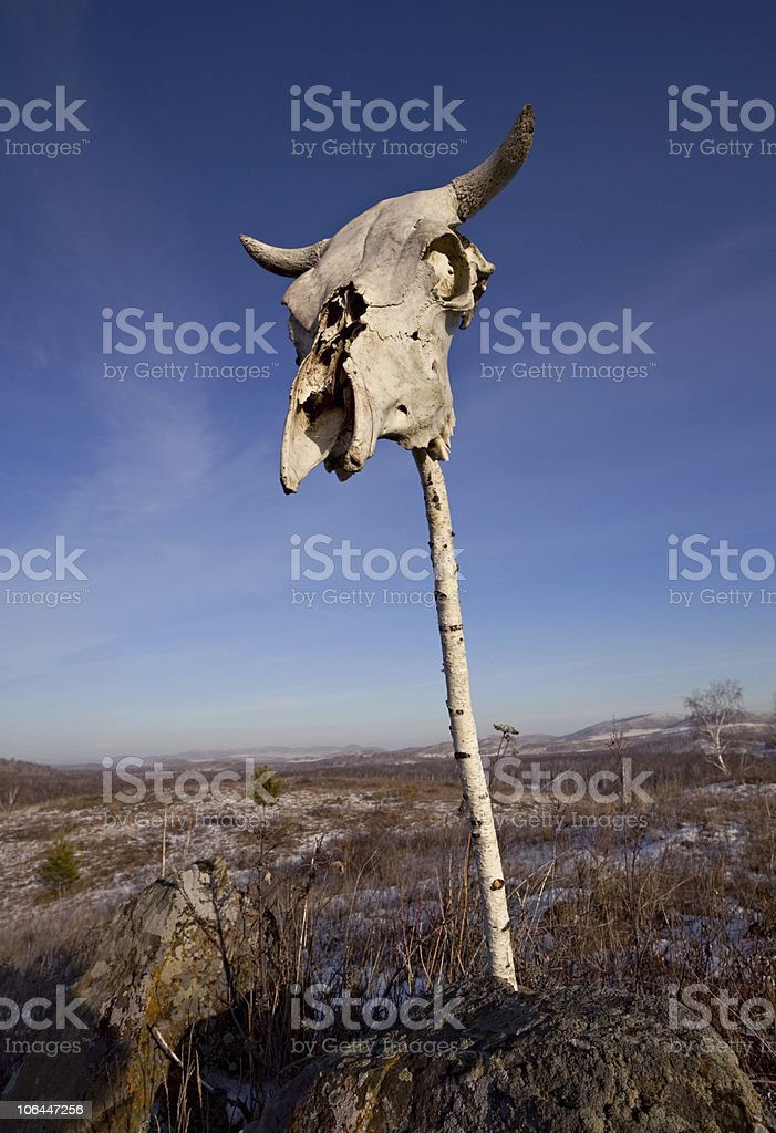 Cow skull on the pole stock photo