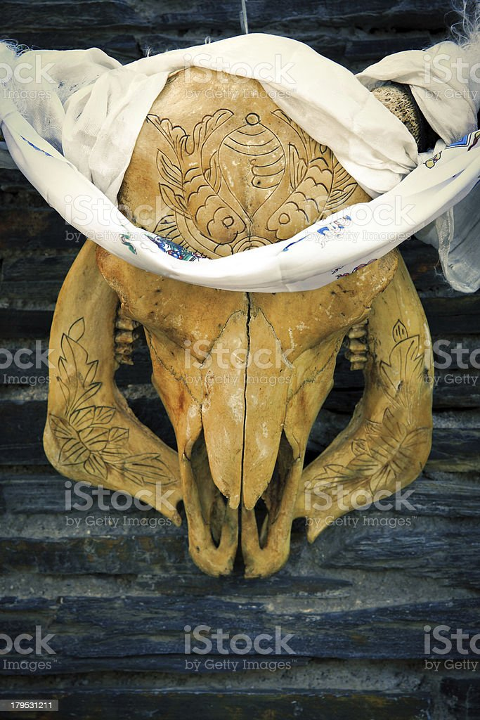 Cow Skull royalty-free stock photo