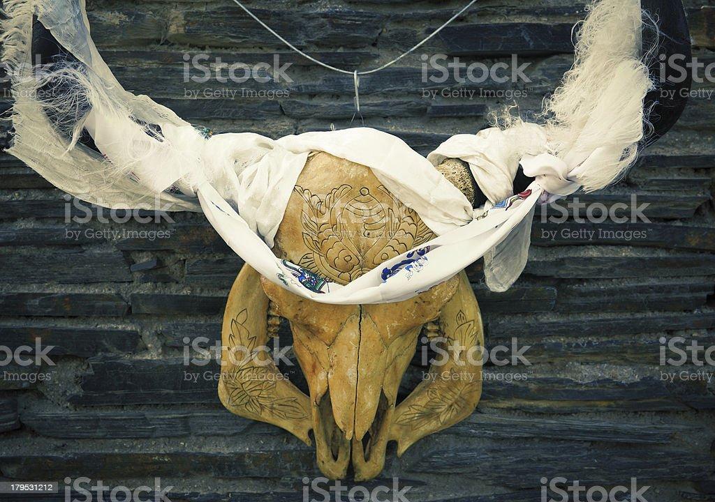 Cow Skull royalty-free stock photo