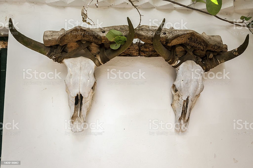 Cow Skulls on a Wall royalty-free stock photo