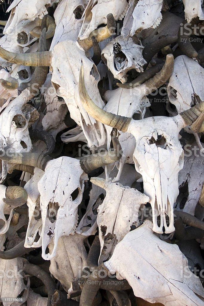Cow Skulls royalty-free stock photo