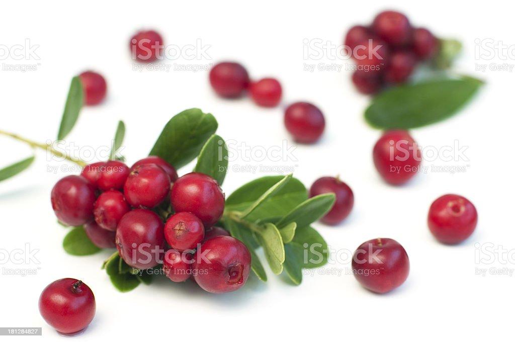 Cowberry photo libre de droits