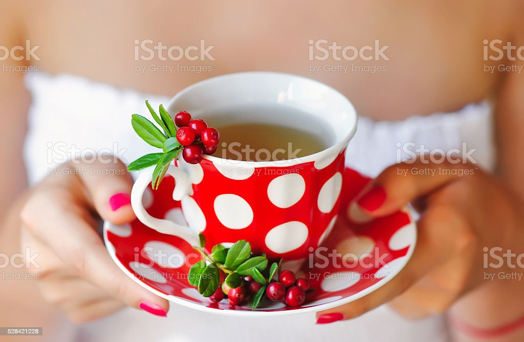 Cowberry (Vaccinium vitis-idaea) tea in woman hands stock photo