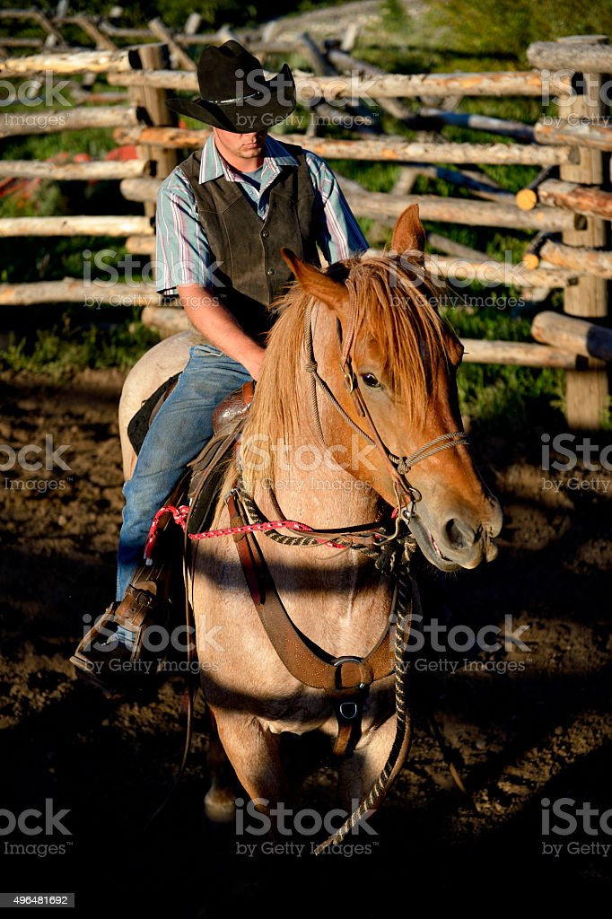 Cowboy and All Around Wrangler Training His Horse stock photo