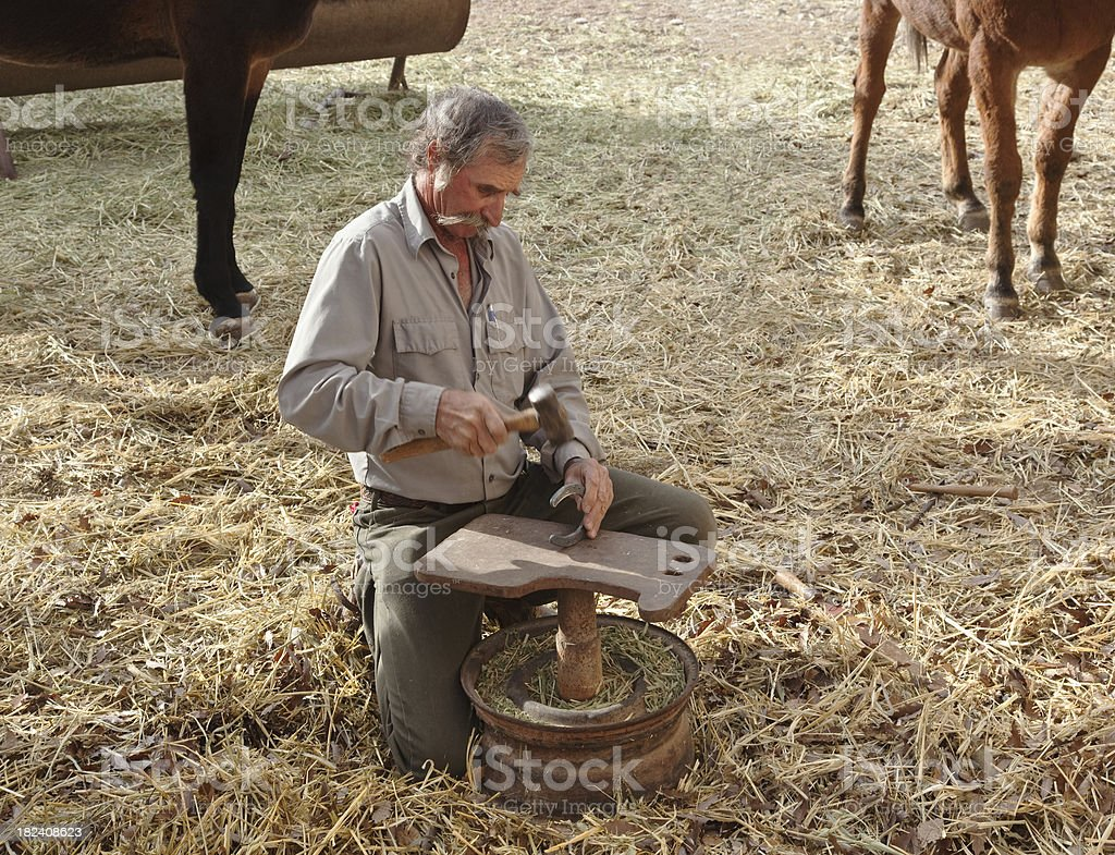 Cowboy Blacksmith hammering shoe for mule. royalty-free stock photo