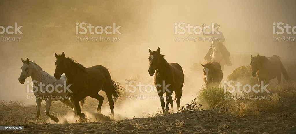 Cowboy chasing five running horses-arm raised,backlit dust stock photo