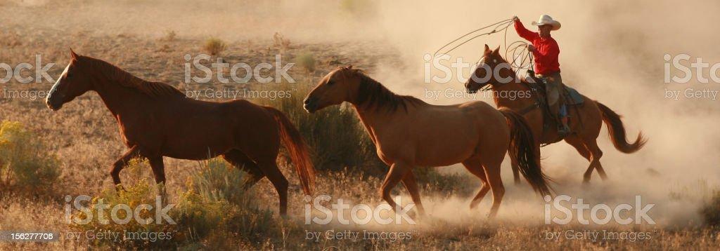 cowboy chasing horses at dawn stock photo