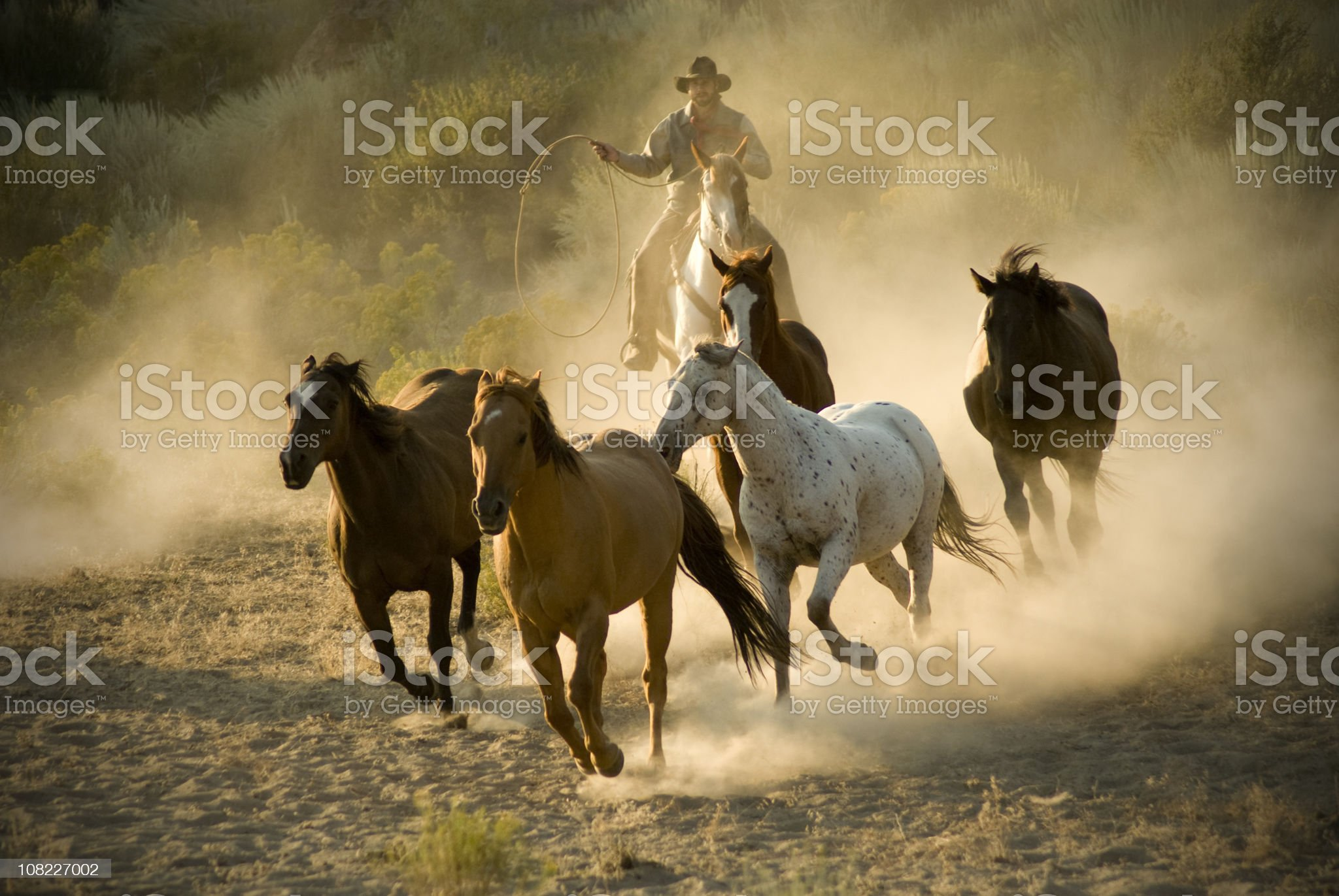 Cowboy Chasing Wild Horses Through Desert royalty-free stock photo