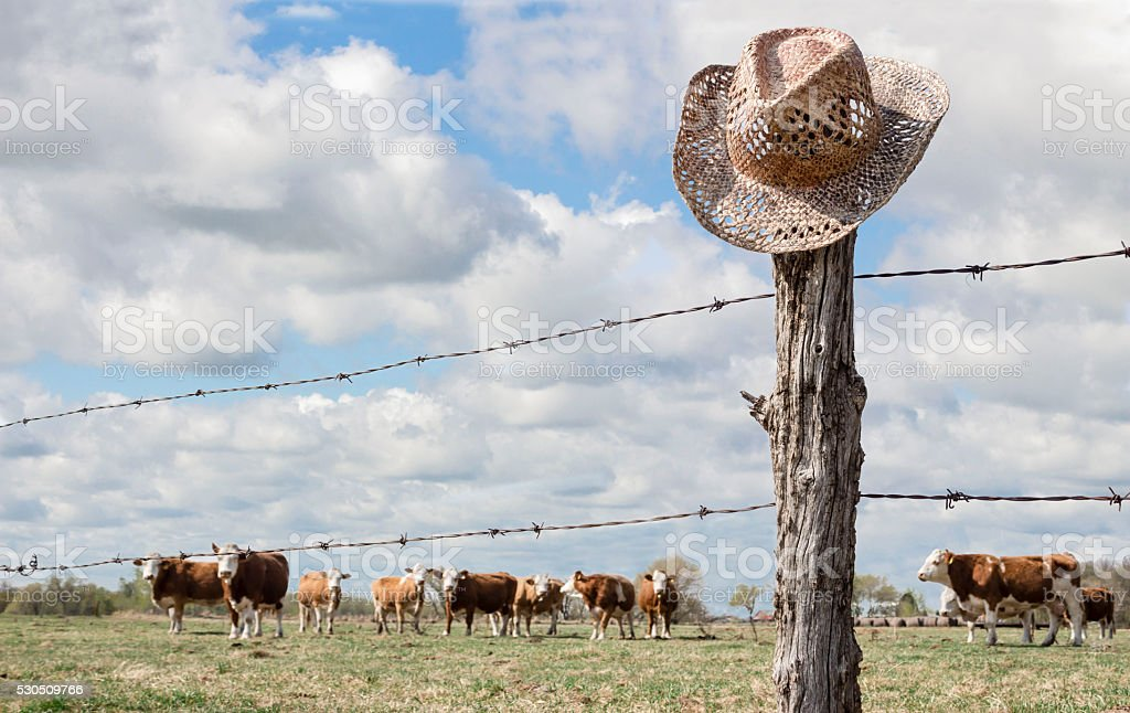 cowboy hat hanging on fence post with cows in background stock photo