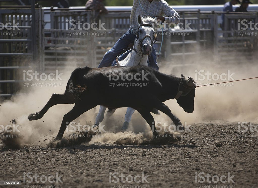 Cowboy Headers and Heelers royalty-free stock photo