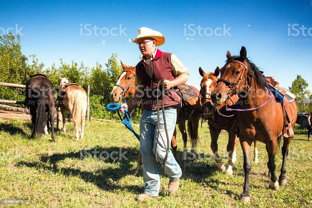 Cowboy leading horses on Montana ranch stock photo