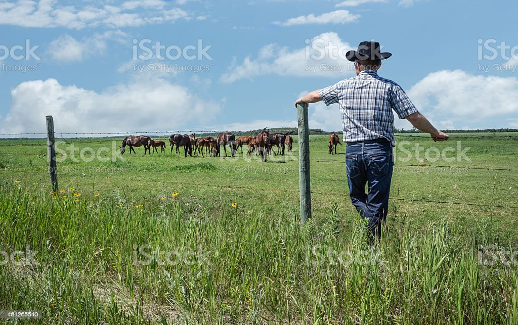 cowboy leaning against fence post gazing a horses in summer stock photo