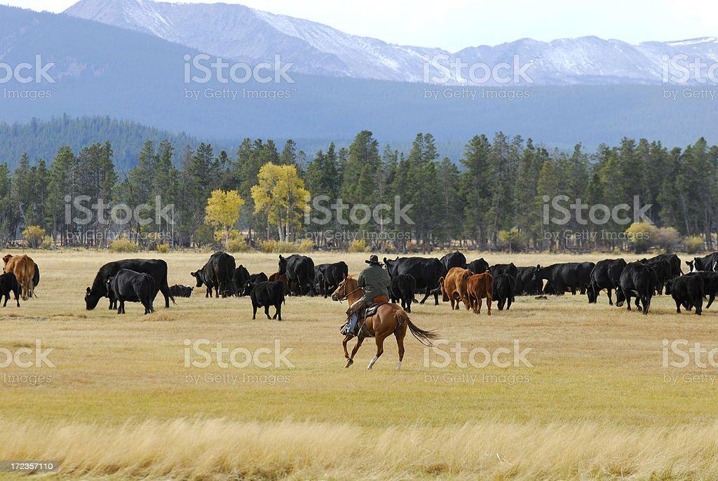 Cowboy on Horseback royalty-free stock photo
