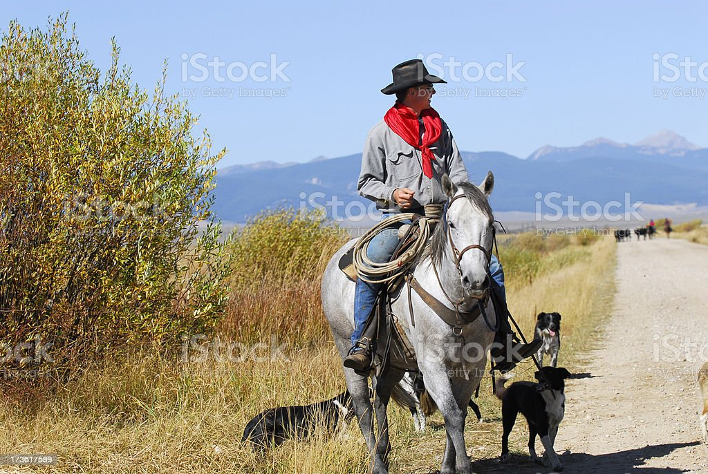 Cowboy on Horseback with Three Dogs stock photo