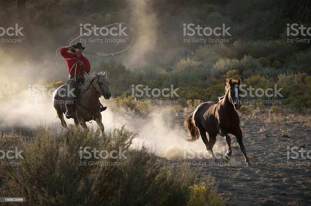 Cowboy on running hose, roping a wild stallion stock photo