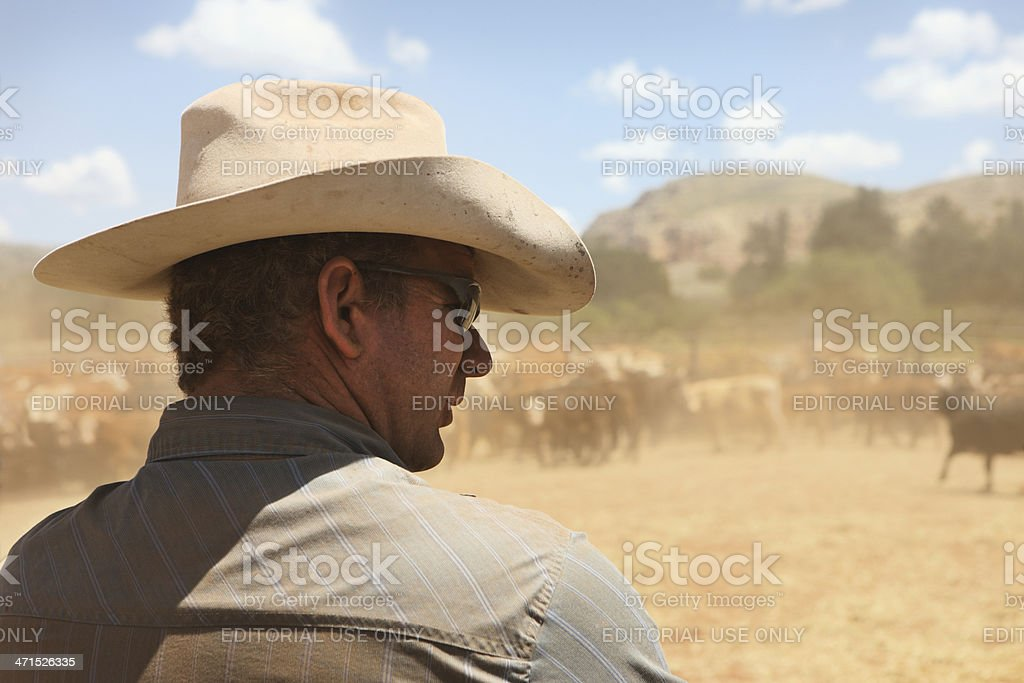 Cowboy Ranch Wrangler Herding Cattle stock photo