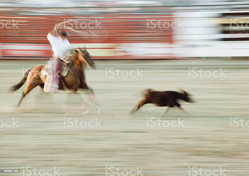 Cowboy Rodeo Calf Roping in Action stock photo