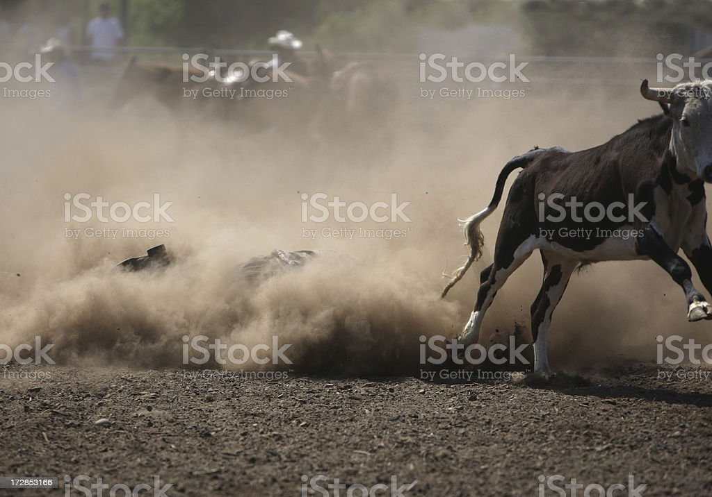 Cowboy Rodeo Wrestler in the Dust stock photo