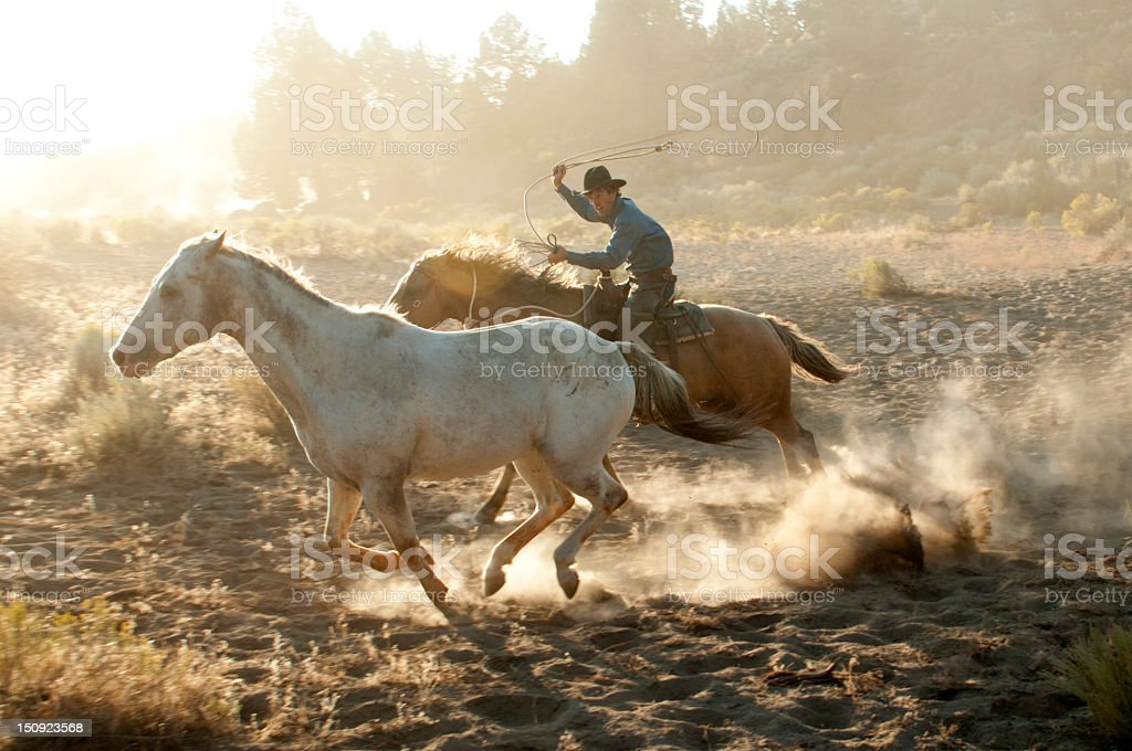 Cowboy roper on running horse chasing a mustang-backlit dust stock photo