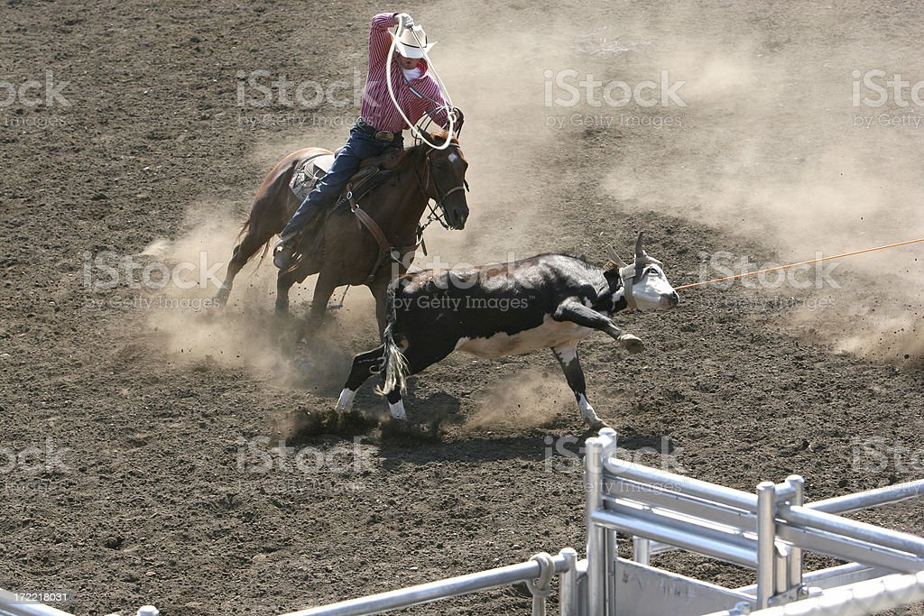 Cowboy roping a steer at the rodeo stock photo