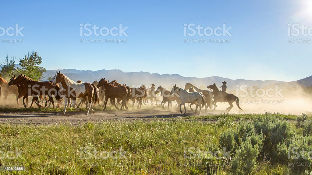 Cowboy running with the horses stock photo