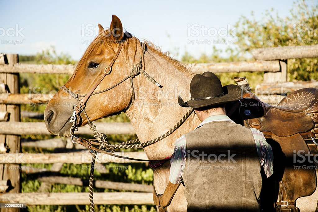 Cowboy saddles up his quarter horse in corral. Montana ranch. stock photo