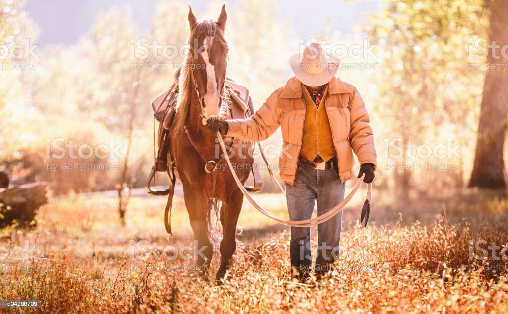 Cowboy walks  with head down guiding horse through golden field stock photo