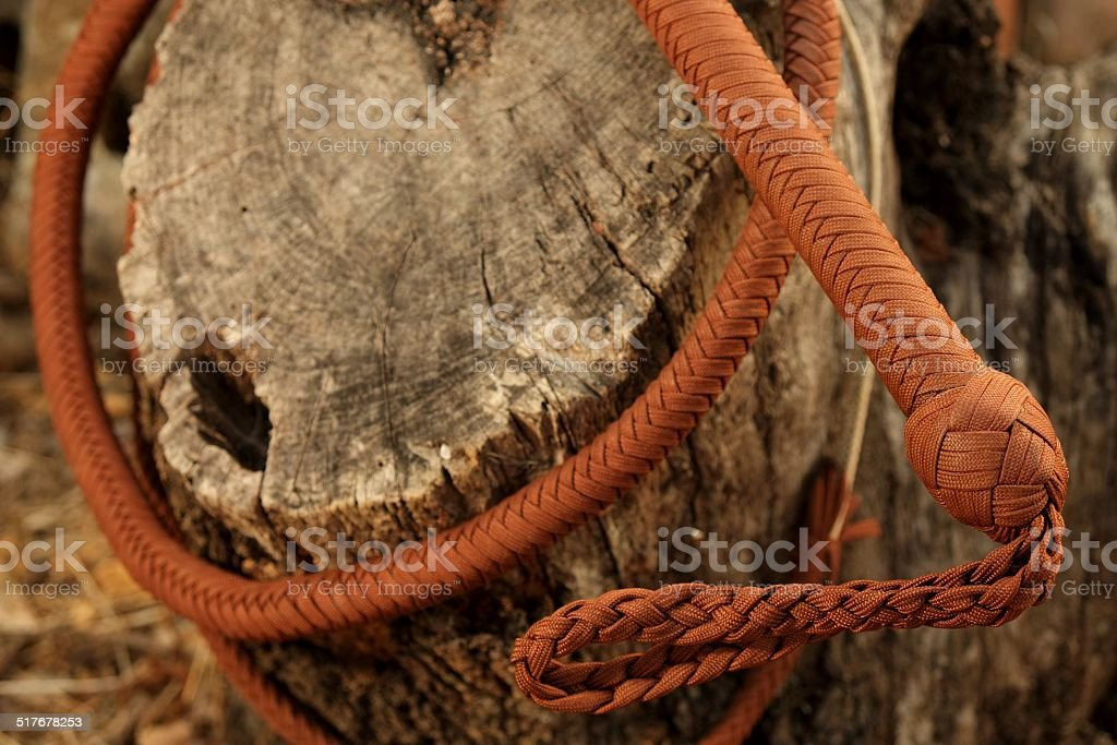 Cowboy Whip Curled Around Tree Trunk stock photo