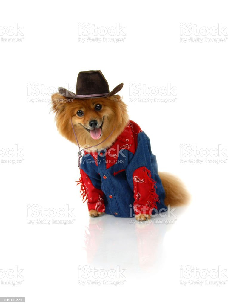 Cowboy without a horse stock photo
