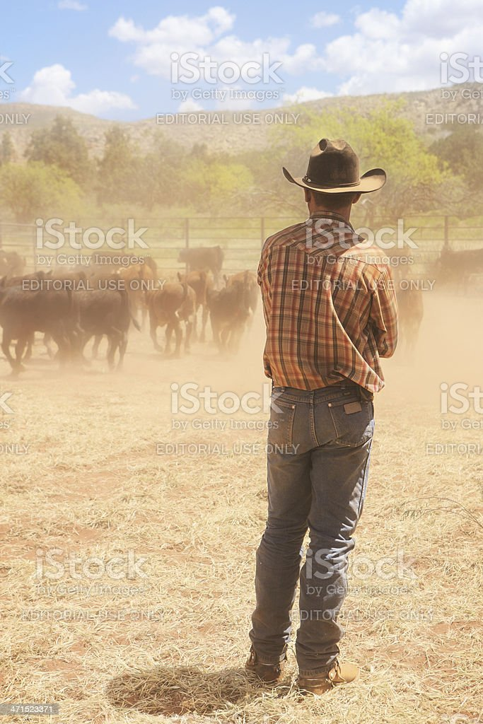 Cowboy Wrangler Cattle Ranch Corral stock photo