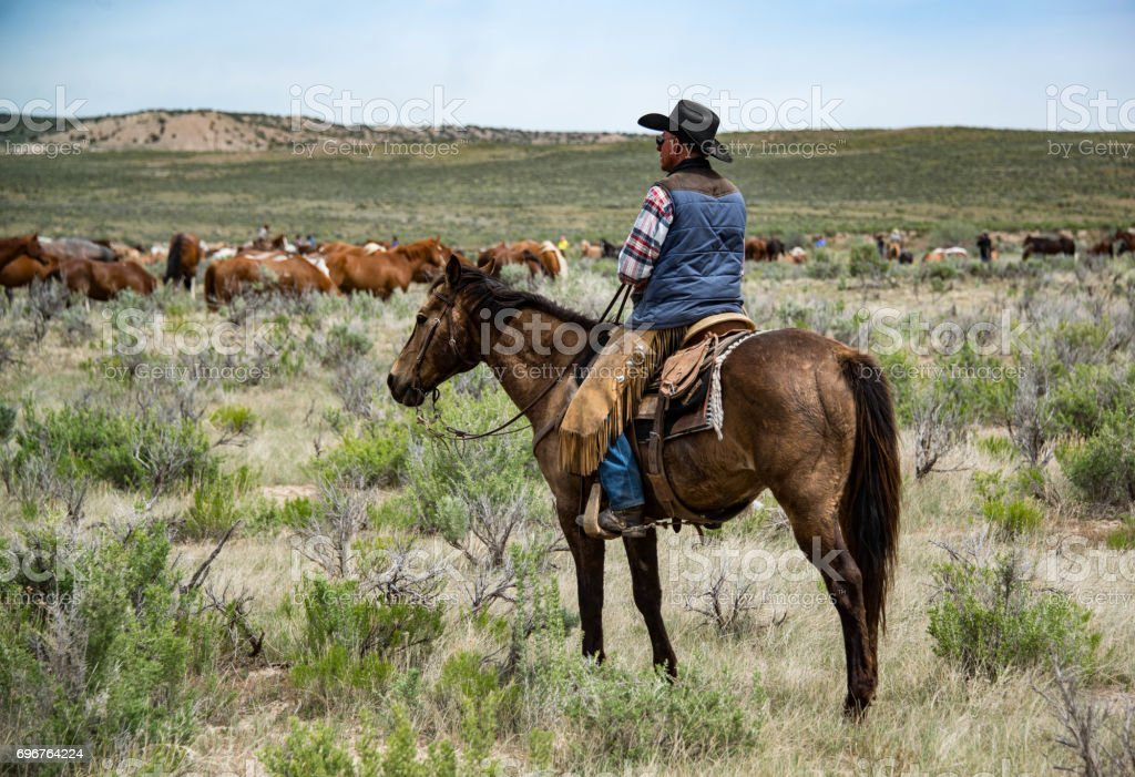 Cowboy wrangler watching over horse herd as they rest and graze stock photo