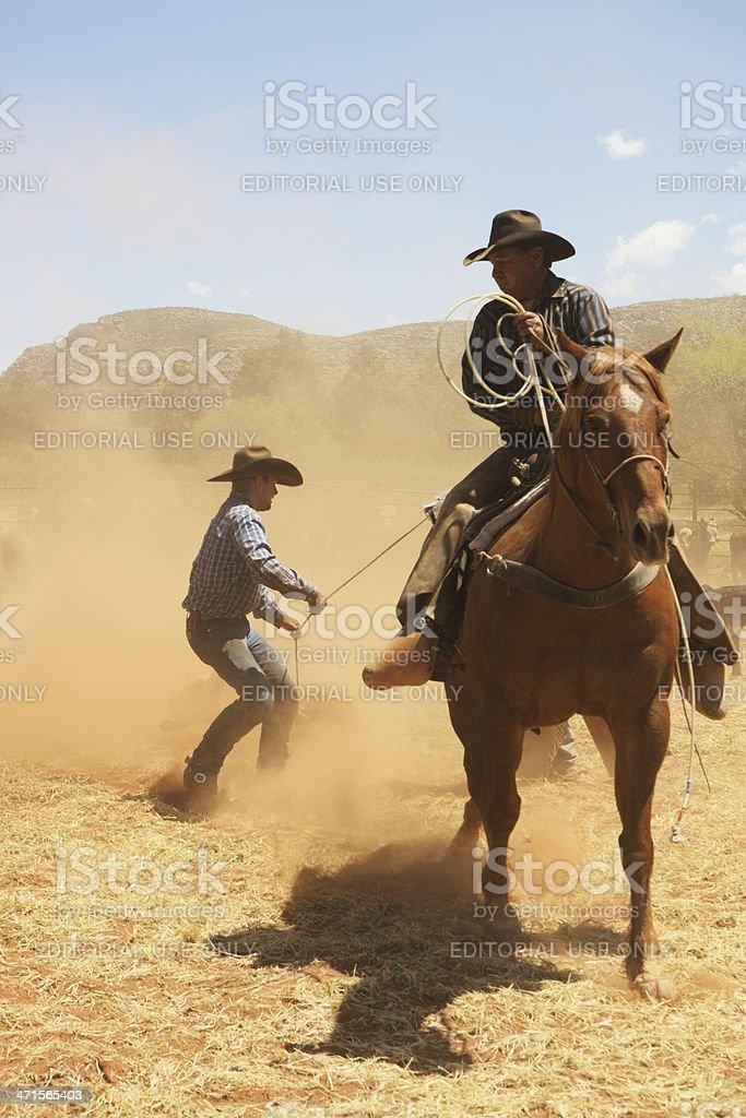 Cowboy Wranglers Lassoing Branding Cattle stock photo