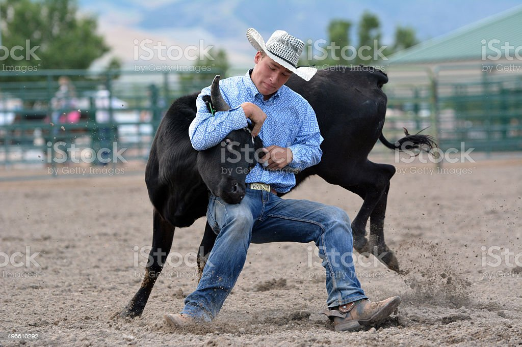 Cowboy Wrestling a Steer stock photo