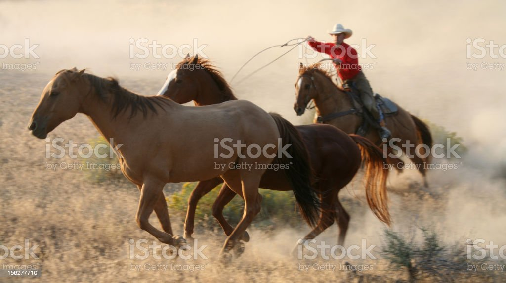 cowboys and wranglers 10 royalty-free stock photo