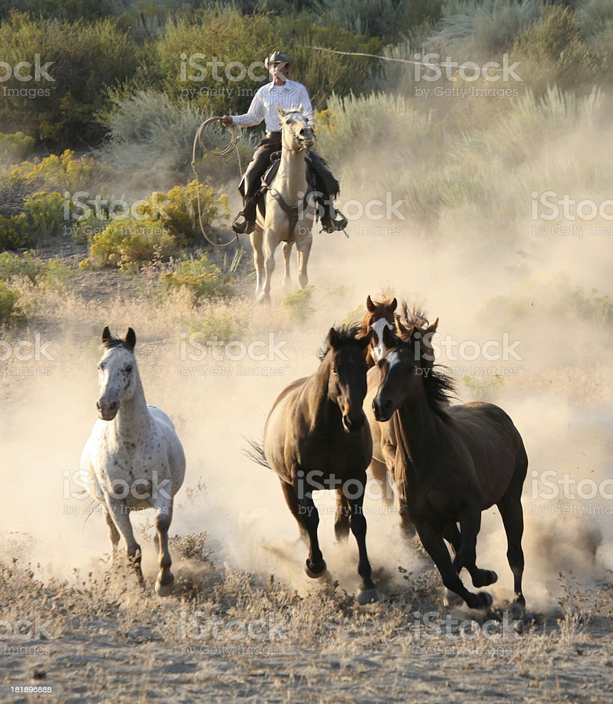 cowboys and wranglers royalty-free stock photo