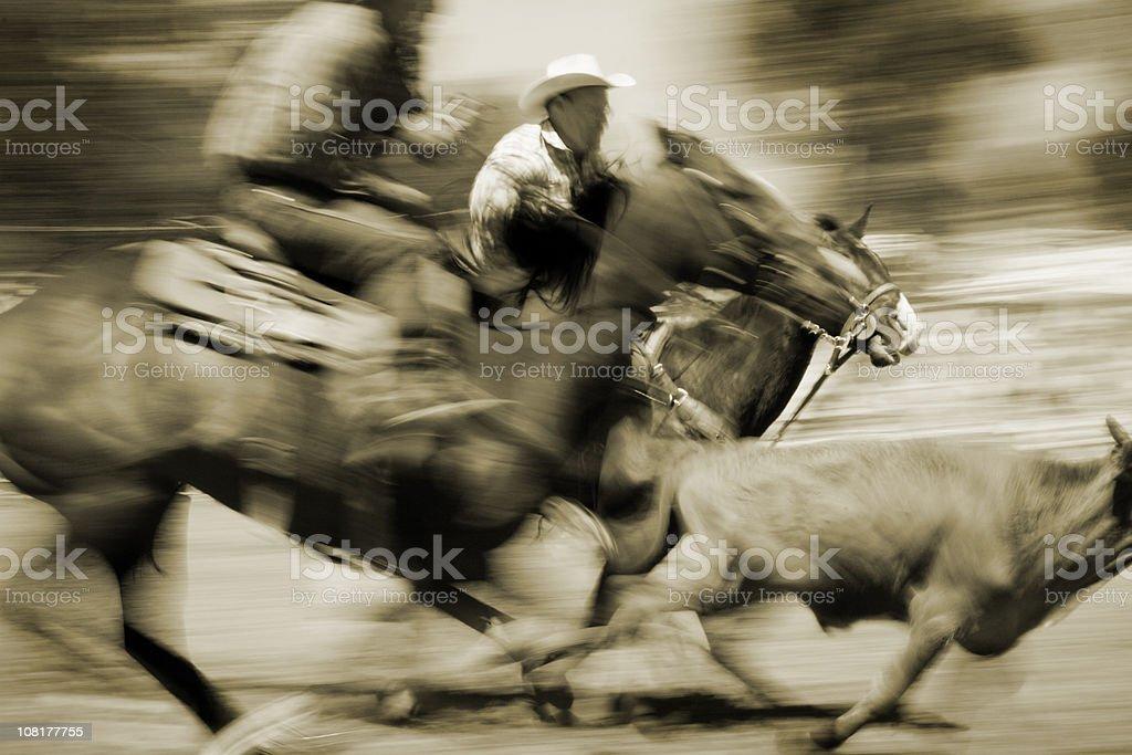 Cowboys calf roping at a rodeo in Montana royalty-free stock photo