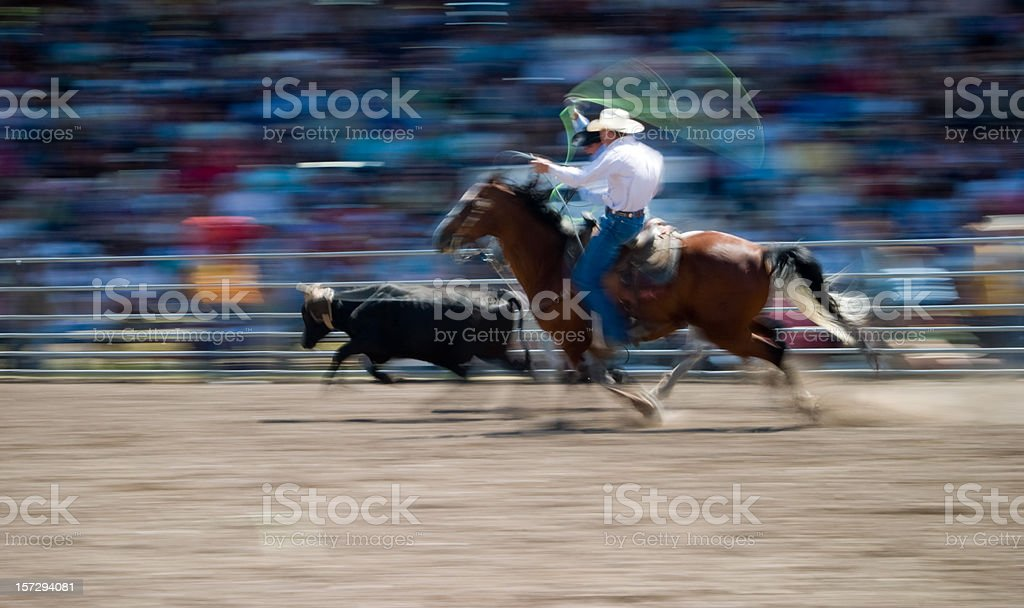Cowboys calf roping at a rodeo in Montana stock photo