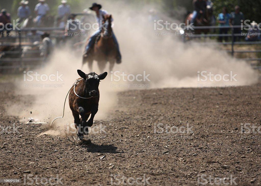 Cowgirl Break Away  Roper stock photo