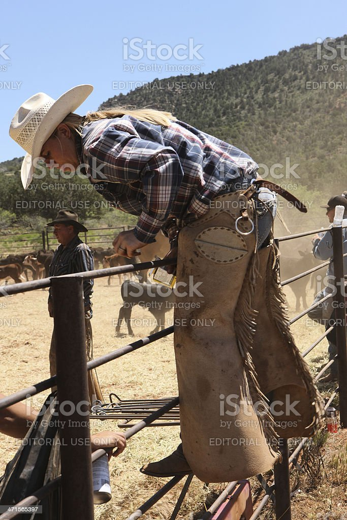 Cowgirl Veterinarian Climbing Corral Fence stock photo