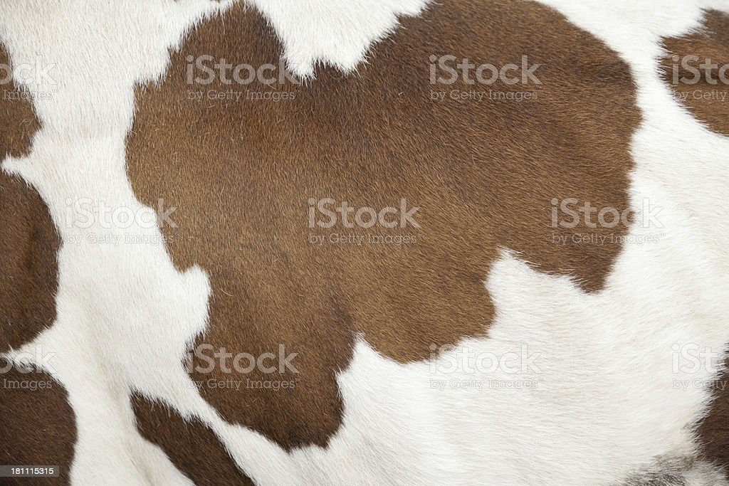 Cowhide of a calf stock photo