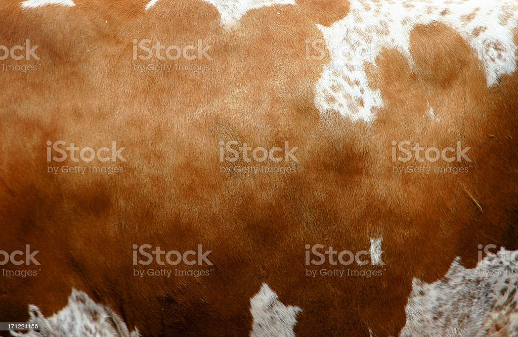 CowHide royalty-free stock photo
