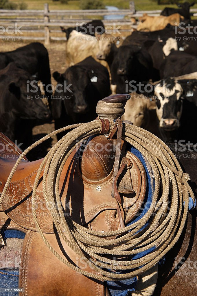 Cows and Gear stock photo